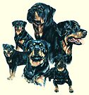 Rottweiler by BarbBarcikKeith