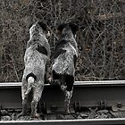 Want to check out the other side of the tracks? by jammingene