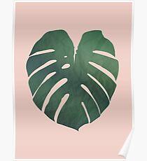 pink monstera Poster