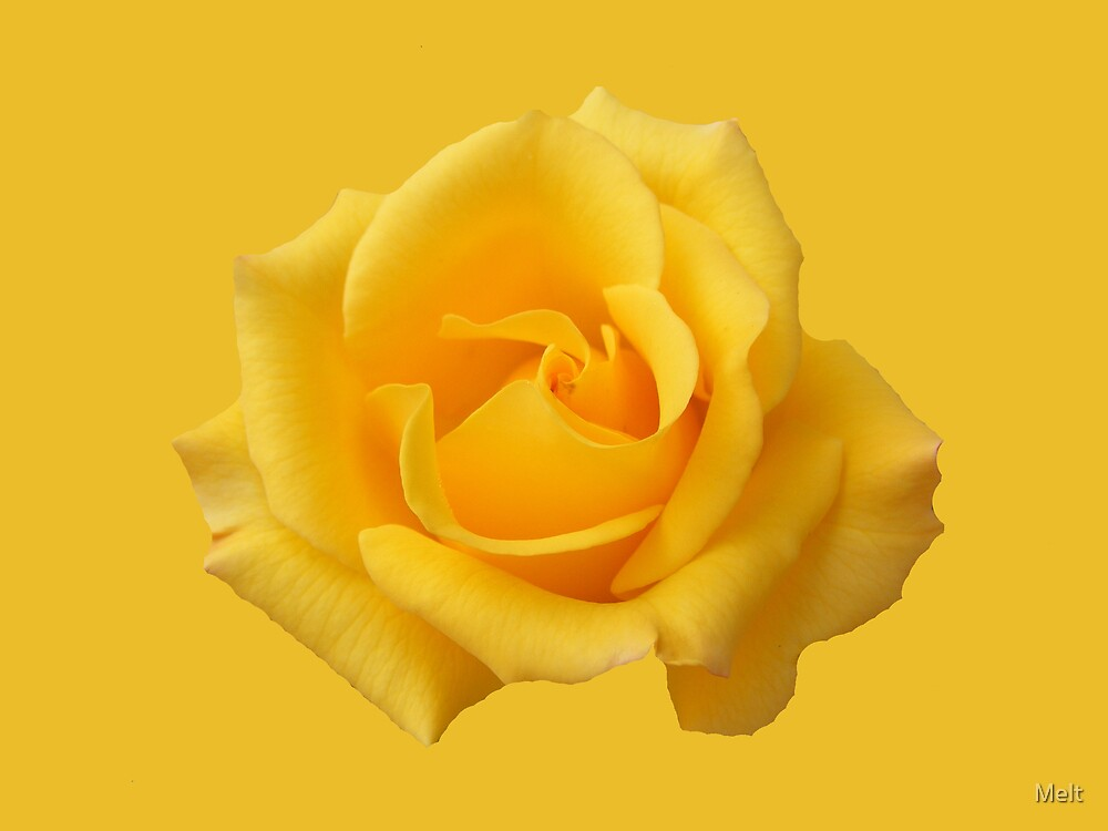 YELLOW ROSE 2 by Melt
