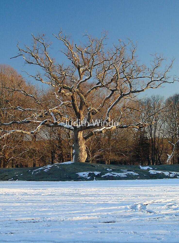 Winter Tree by Judith Winde