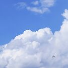 Free as a bird 2 by Sukhwinder Flora