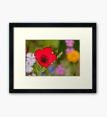 Red flower [ Product design ] Framed Print