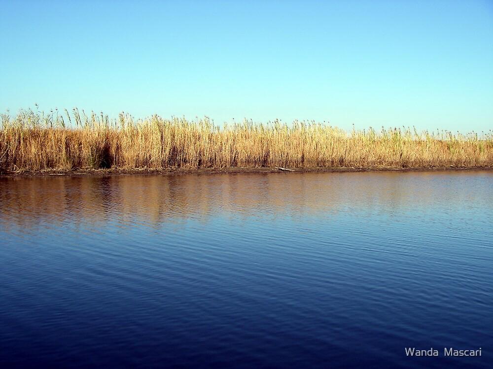 Down on the Bayou by Wanda  Mascari
