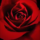 A Red Rose from My Soulmate by LindaPerryMcC