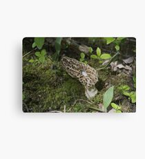 It's a morel issue Canvas Print