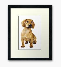 Dachshund puppy Framed Print