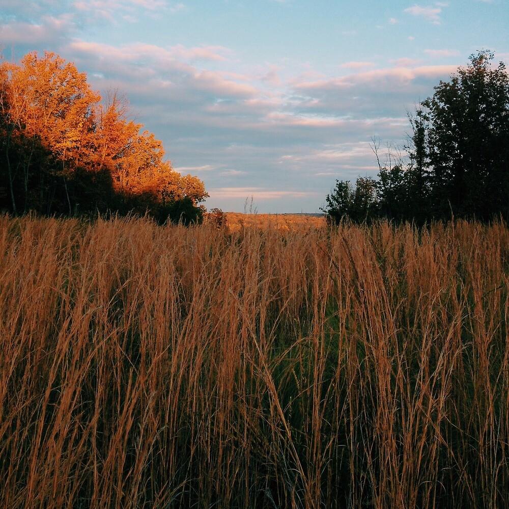 A Field Before Sunset by Adam Kearney