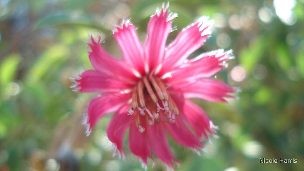 Pinky Flower by Nicole Harris