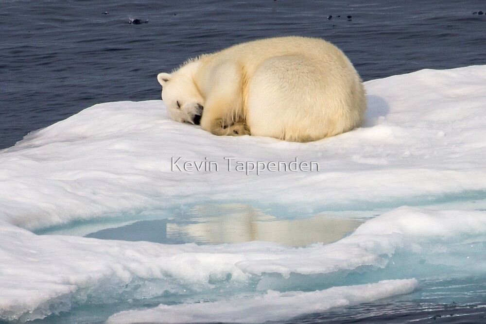 Polar Bear Reflection by Kevin Tappenden