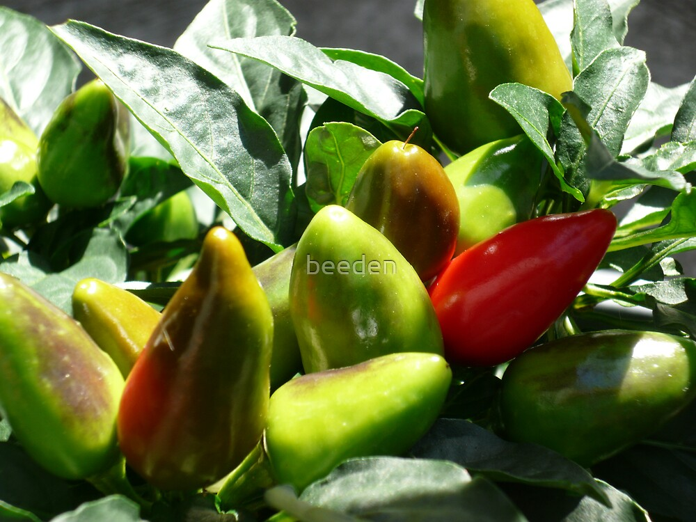 Chilis by beeden