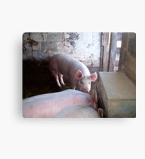 here piggy Metal Print