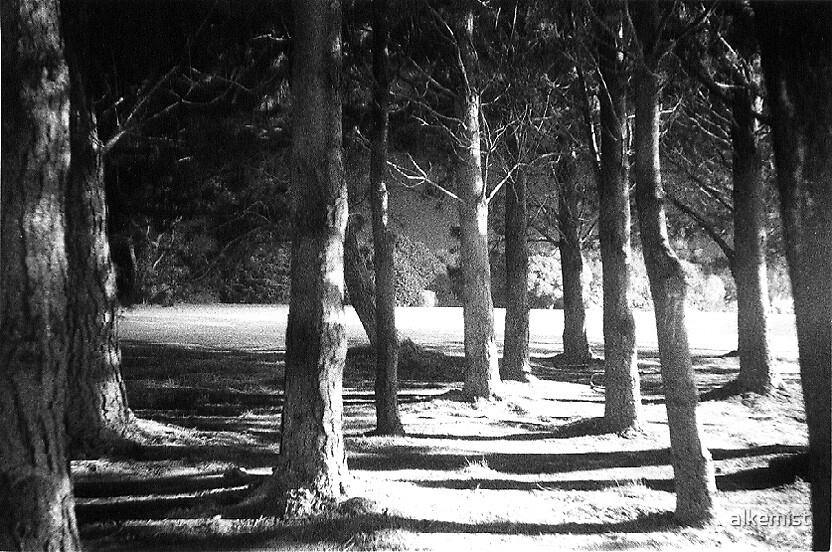 midnight trees by alkemist
