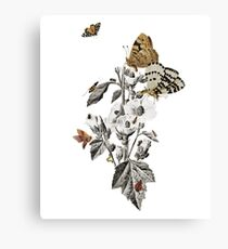 Insect Toile Canvas Print