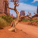 Twisted Tree by JohnDSmith