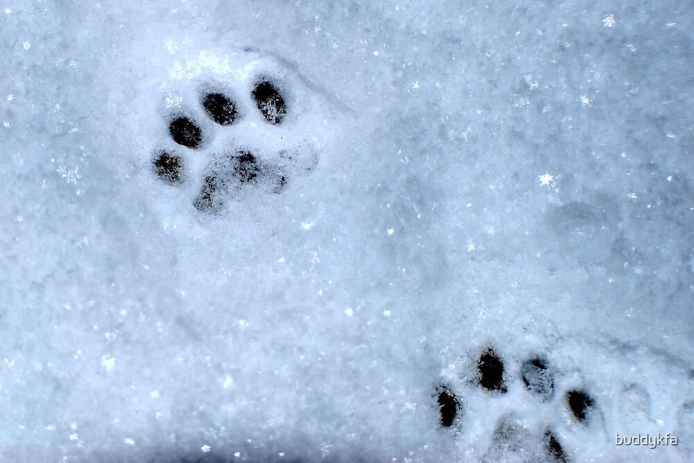 Snow Cat by buddykfa