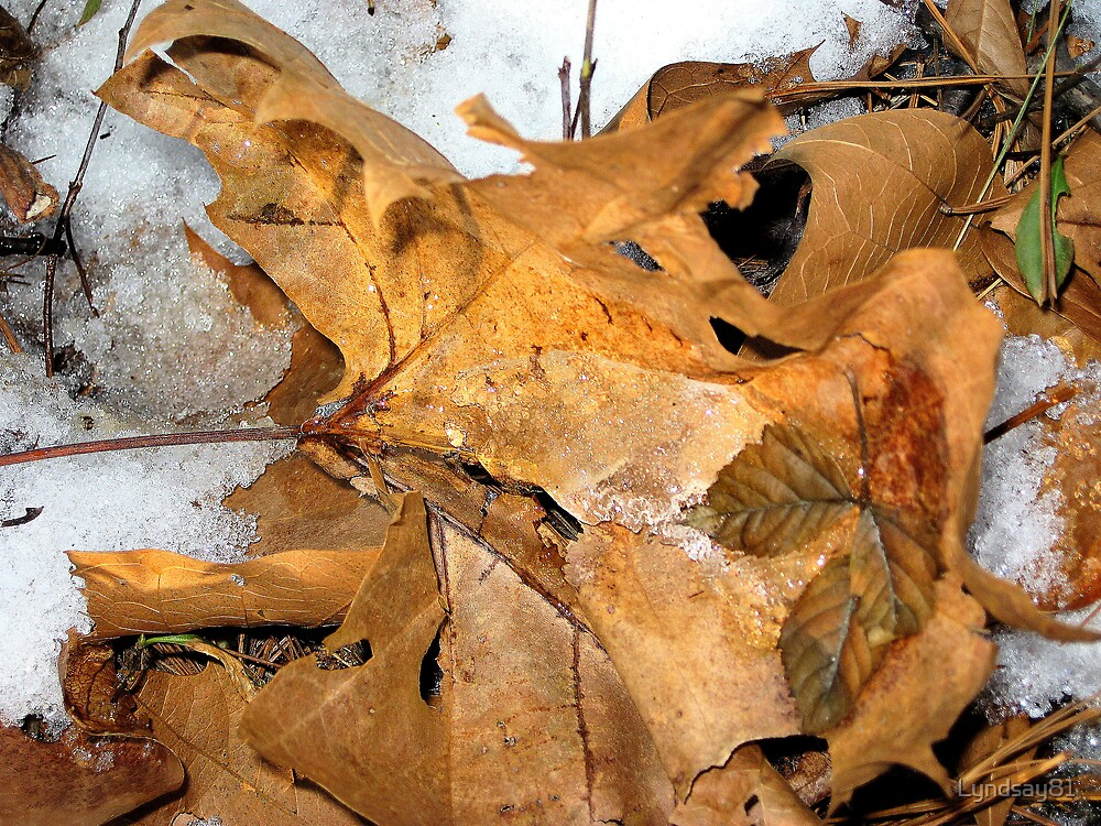 Ice on the Leaves by Lyndsay81