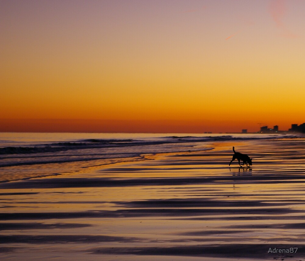 Beach Hound by Adrena87