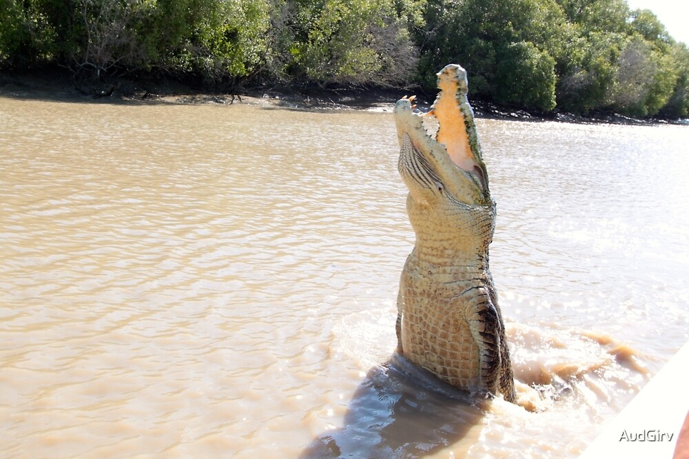 Croc on Yellow River NT by AudGirv
