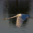 Great Egret by Marvin Collins