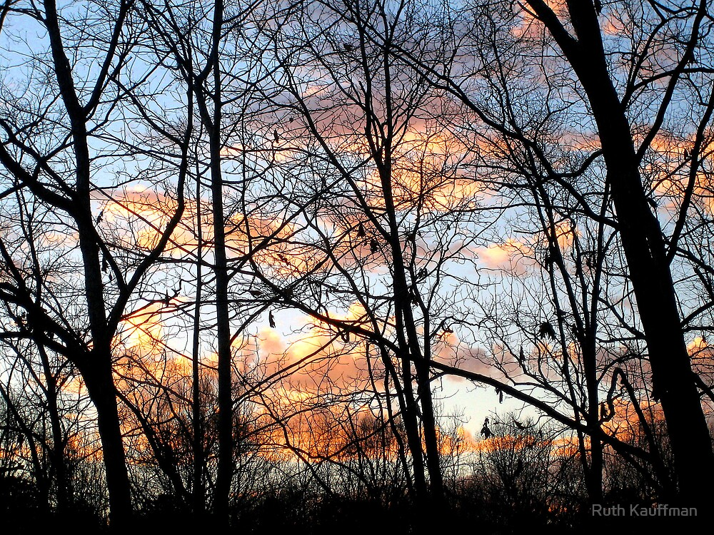 """""""Through The Trees"""" by Ruth Kauffman"""