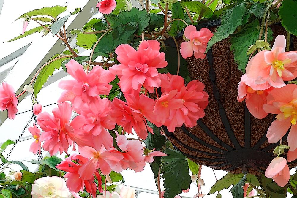 Flowers In Hanging Basket by David Jamrozik