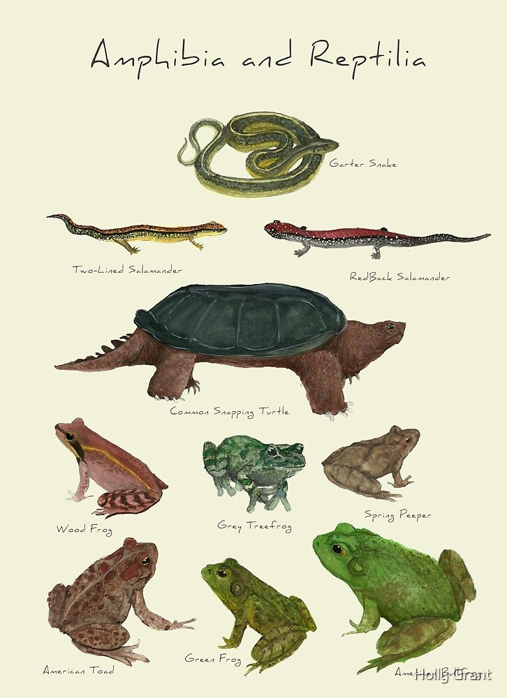 Amphibians and Reptiles by Holly Faulkner