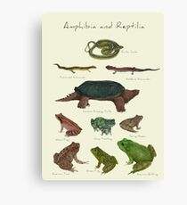 Amphibians and Reptiles Canvas Print