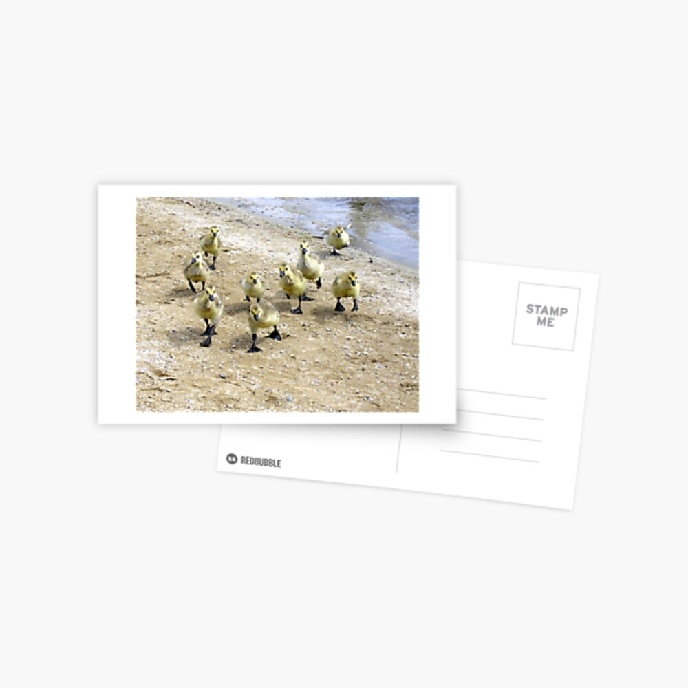 Storming the Beach Postcard