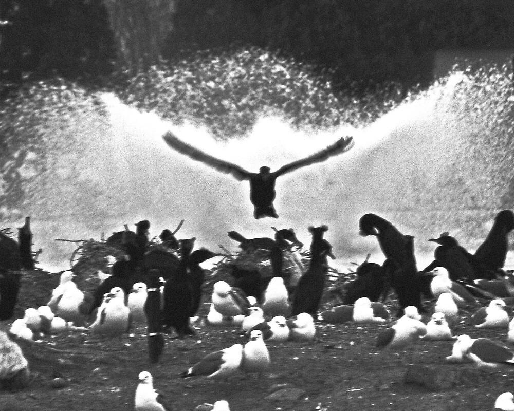 Fountain Birds by Jon  Johnson