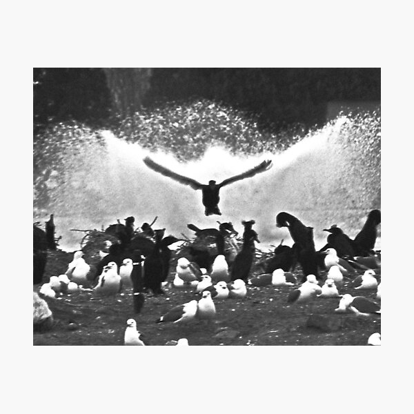 Fountain Birds Photographic Print