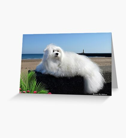 Snowdrop the Maltese - Beside the Seaside Greeting Card
