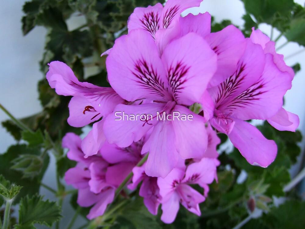 Pretty in purple by SharonD