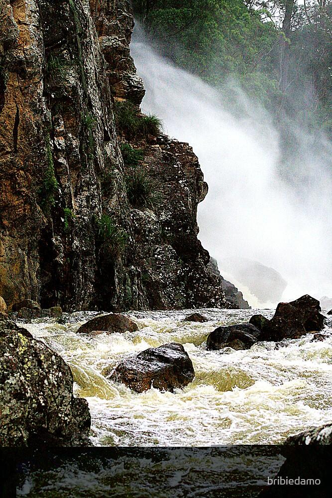 Obi Obi Creek  by bribiedamo