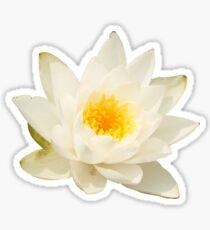 Water Lotus Sticker