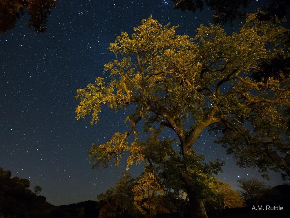 Live Oak & Starry Night by A.M. Ruttle