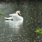 Rainy Day Swan by Widcat
