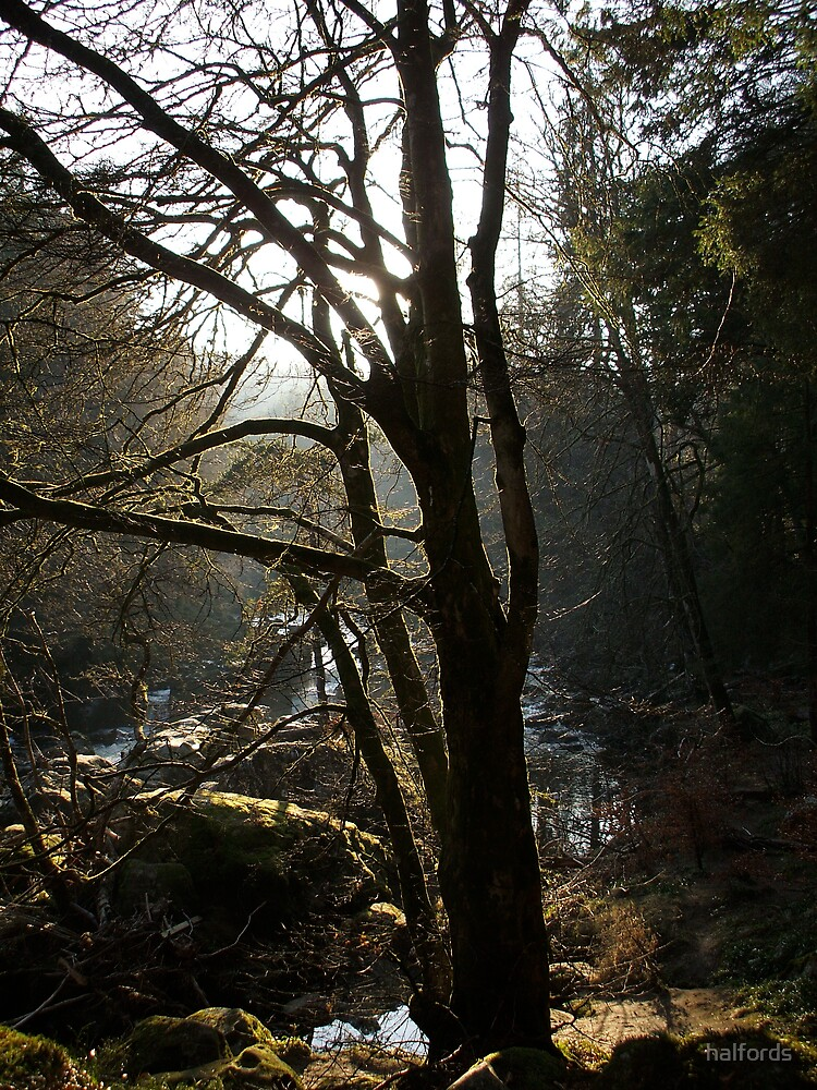 scottish woodland spring at last by halfords
