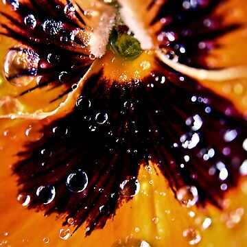 Waterdrops on Orchid  by leviadraconia