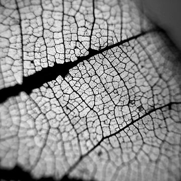 Dead Leaf Monochrome  by leviadraconia