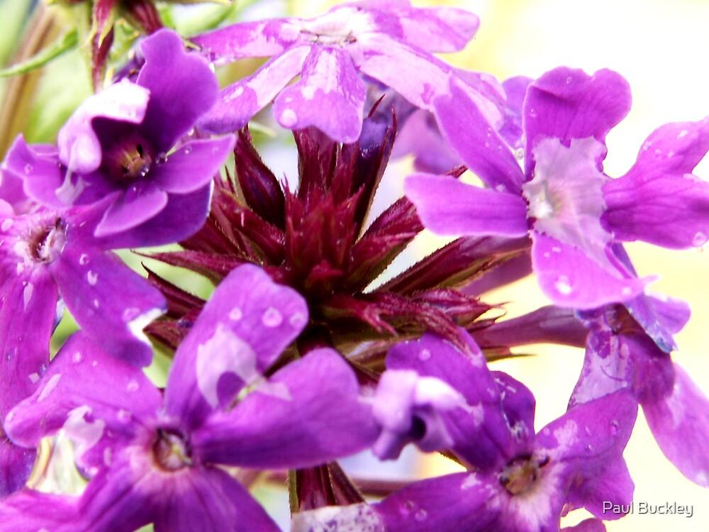 My Purple Garden by Paul Buckley
