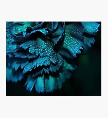 Carnation - Powder Blue Photographic Print