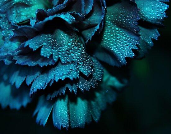 Carnation - Powder Blue by Ingrid Beddoes