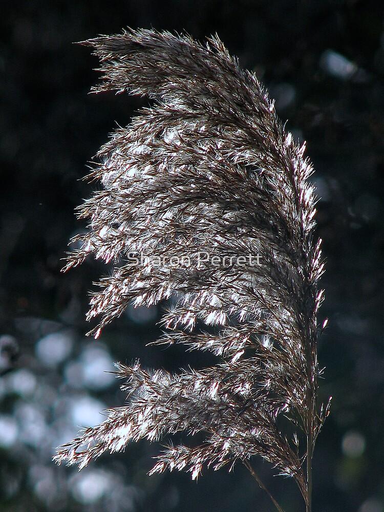 Sunlit Grass by Sharon Perrett