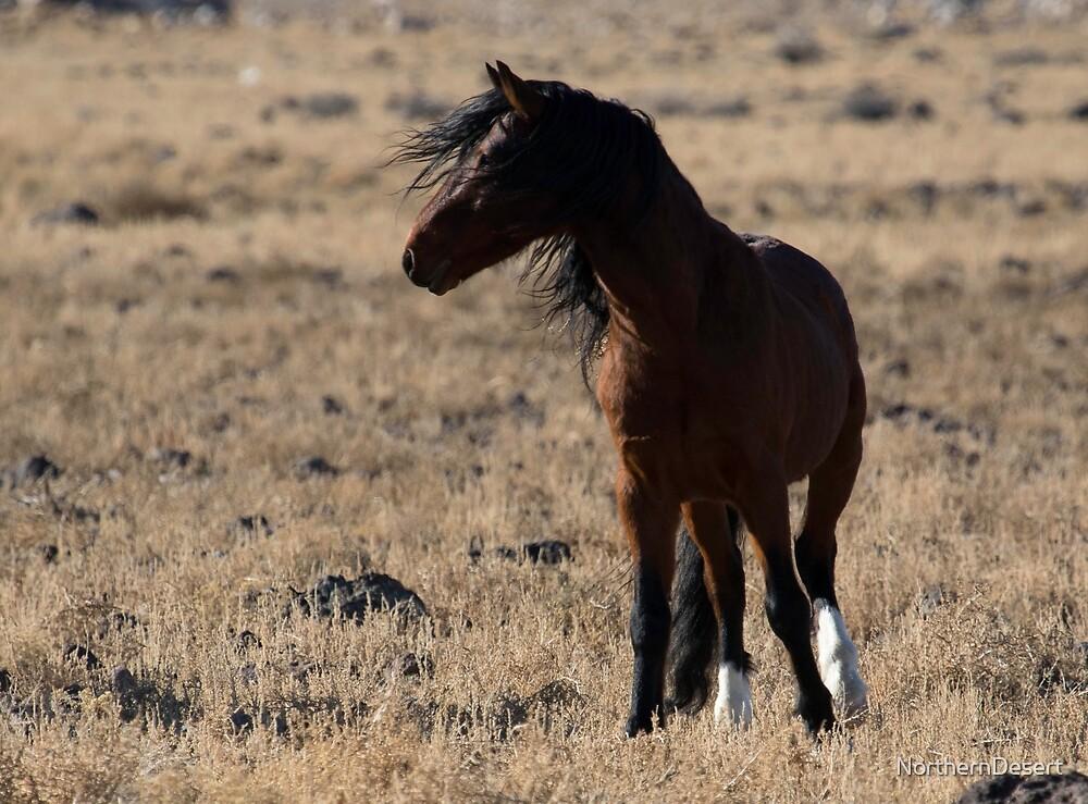 Stallion on Alert by NorthernDesert