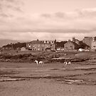 Shoreline with Horses, Millport in Scotland. West coast, off Isle of Cumbrae  by Grant Wilson
