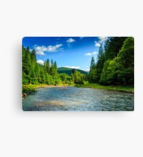Mountain river among spruce forest Canvas Print