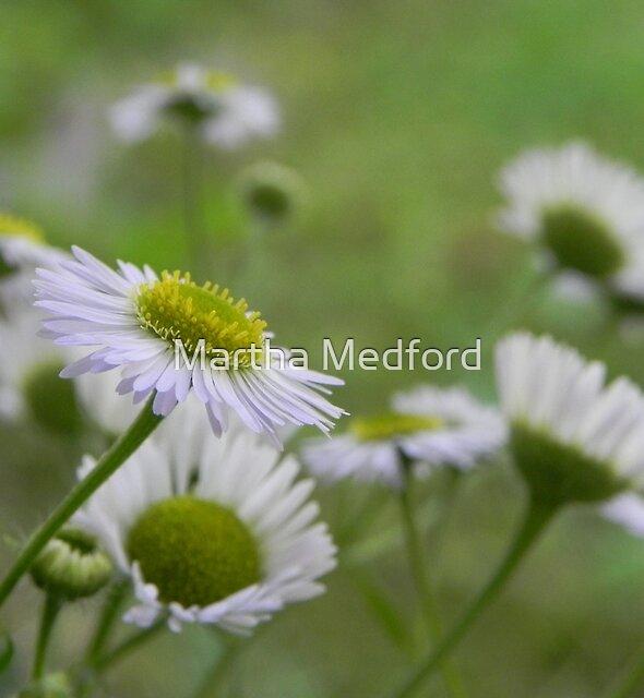Little Beauty by Martha Medford