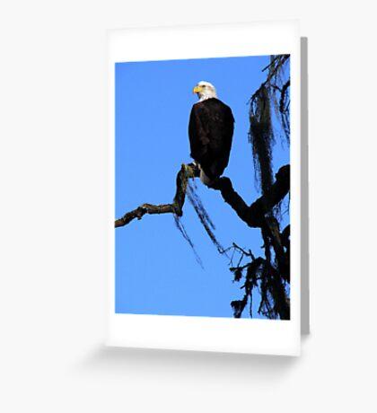 Bald Eagle & Spanish Moss, Alisal Ranch Greeting Card