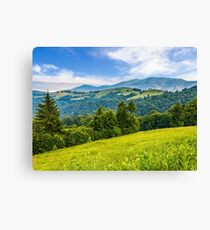 spruce forest on a mountain hill side Canvas Print
